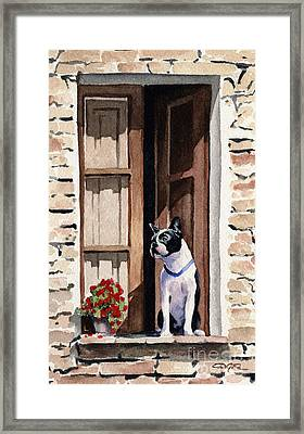 Boston Terrier Framed Print by David Rogers