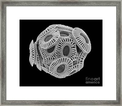 Calcareous Phytoplankton, Sem Framed Print by Steve Gschmeissner