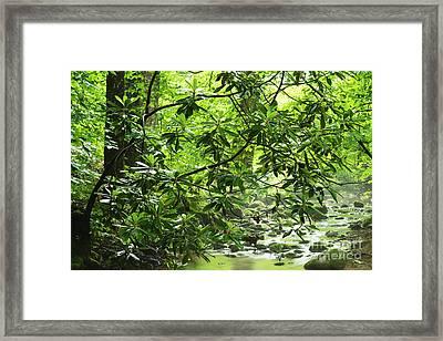 Cranberry Wilderness Framed Print by Thomas R Fletcher