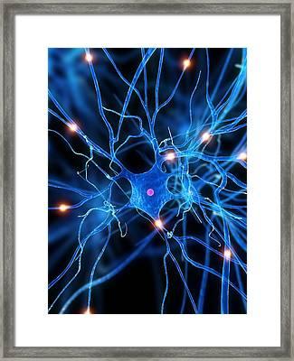 Nerve Cell, Artwork Framed Print by Sciepro