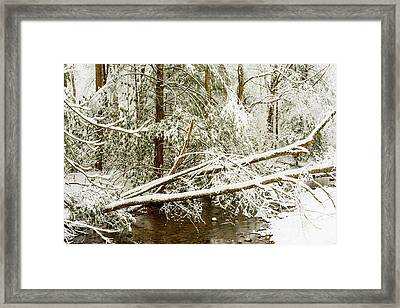 Winter Along Cranberry River Framed Print by Thomas R Fletcher