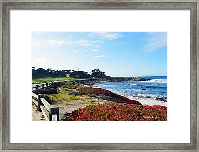 17 Mile Drive Shore Line Framed Print by Barbara Snyder