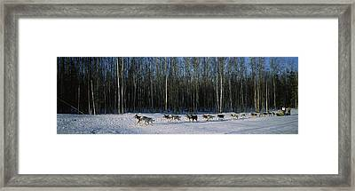 18 Huskies Begin The Long Haul Of 1049 Framed Print by Panoramic Images