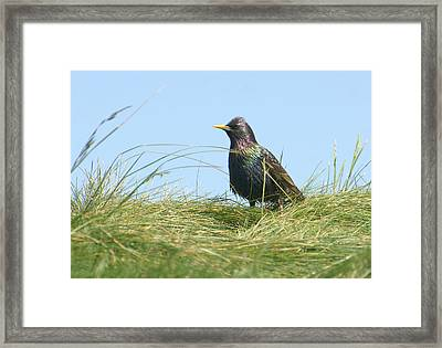 A Place In The Sun Framed Print by Fraida Gutovich