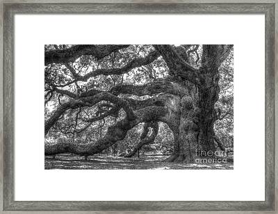 Angel Oak Tree Charleston Sc Framed Print by Dustin K Ryan