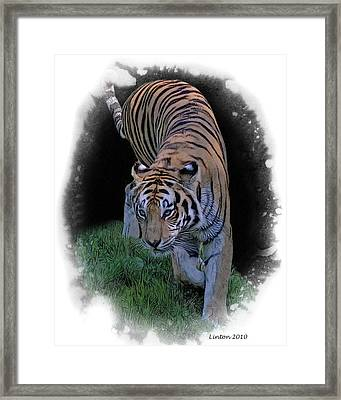 Asian Tiger Framed Print by Larry Linton