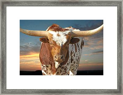 Bad Attitude Framed Print by Robert Anschutz