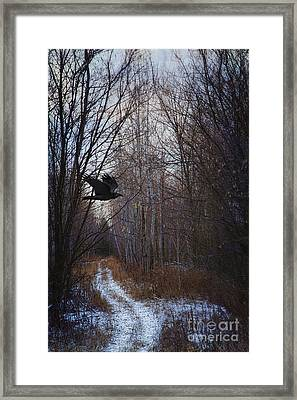 Black Bird Flying By In Forest Framed Print by Sandra Cunningham