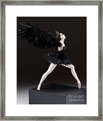 Black Swan  Framed Print by Vickie Arentz