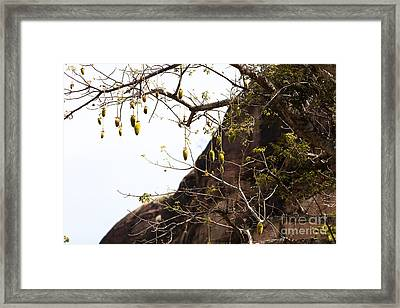 Breadfruit In Africa Framed Print by Massimo Lama