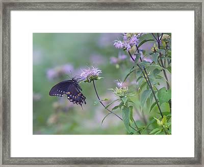 Butterfly Framed Print by June Marie Sobrito
