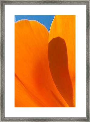 Californian Poppies Framed Print by Alexander Fedin