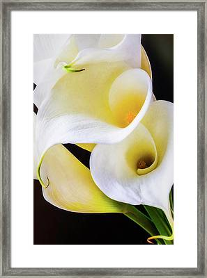 Calla Lily Beauty Framed Print by Garry Gay