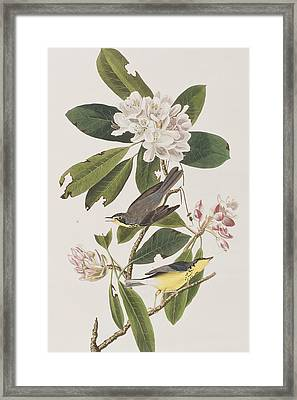 Canada Warbler Framed Print by John James Audubon
