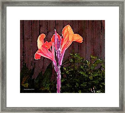 Canna Lily  Framed Print by Fred Jinkins