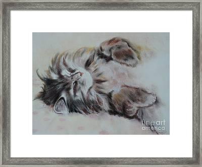 Cat Nap Framed Print by Carla Carson
