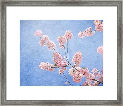 Cherry Blossoms Framed Print by Kim Hojnacki