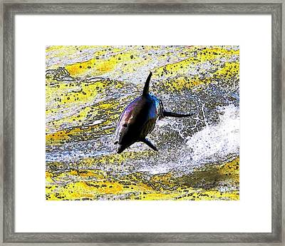 Dolphin Framed Print by John Collins
