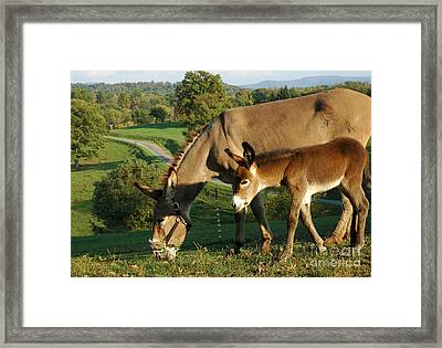 Donkey With Foal Framed Print by Thomas R Fletcher