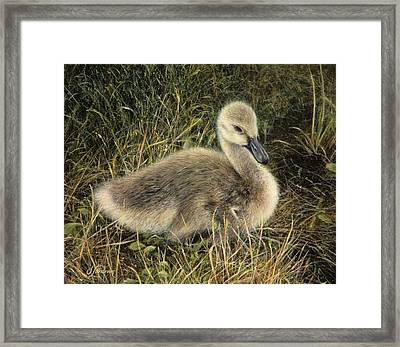 Down To Earth Framed Print by Janet Landrum