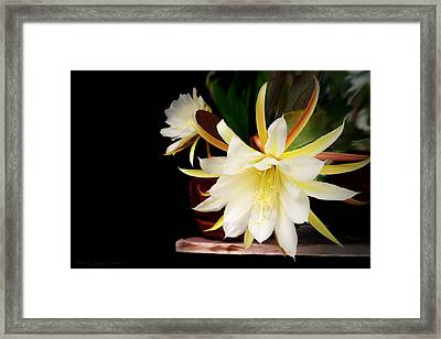 Elegant Beauty Framed Print by Joyce Dickens