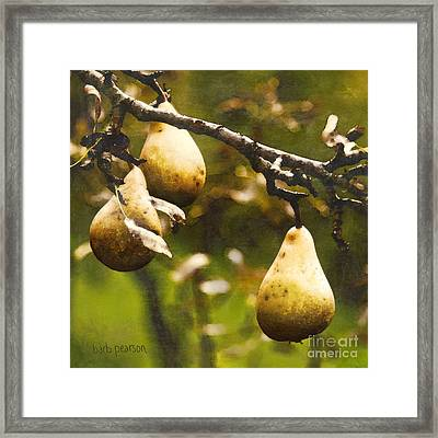 Fall Harvest Framed Print by Barb Pearson