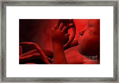 Fetus Inside Womb Framed Print by Stocktrek Images