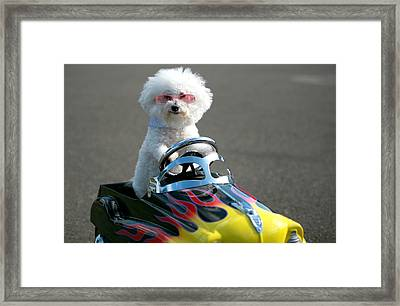 Fifi Goes For A Ride Framed Print by Michael Ledray