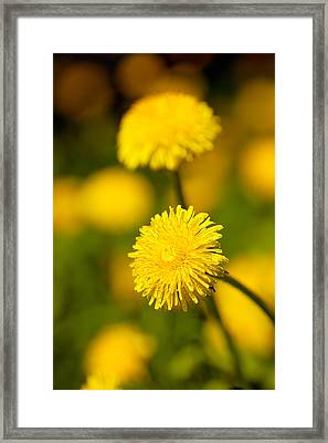 Flowers Framed Print by James Taylor