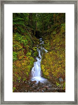 Streaming In The Olympic Rainforest Framed Print by Adam Jewell