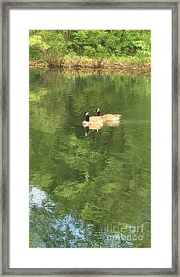 Geese On A Sunday Drive Framed Print by Susan Hendrich
