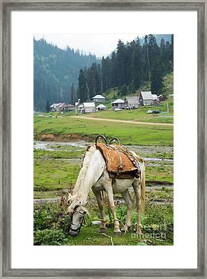 Horse Framed Print by Svetlana Sewell