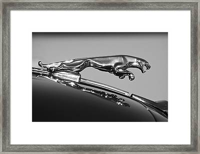 Jaguar Hood Ornament 2 Framed Print by Jill Reger