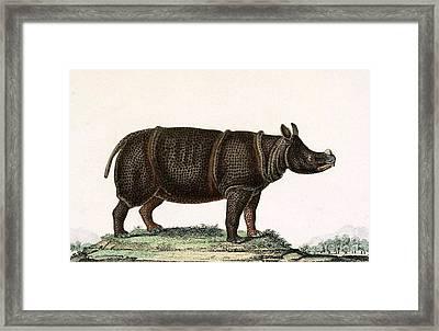 Javan Rhinoceros, Endangered Species Framed Print by Biodiversity Heritage Library