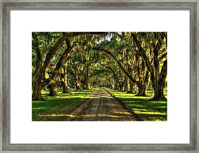 Live Oaks Of Tomotley Plantation Framed Print by Reid Callaway