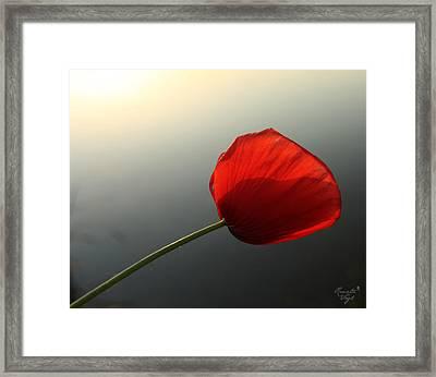 Mohnblume Framed Print by Renata Vogl