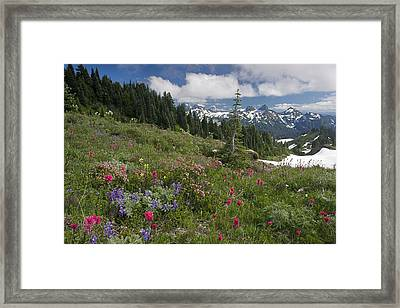 Mountain Meadow Framed Print by Bob Gibbons