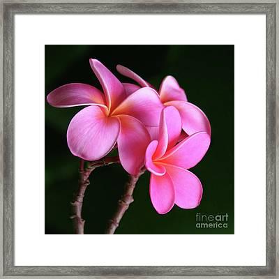 Na Lei Pua Melia Aloha He Ala Nei E Puia Mai Nei Pink Plumeria Framed Print by Sharon Mau
