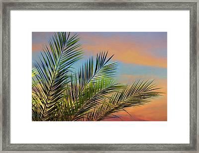 Naples Palms Framed Print by Lori Deiter