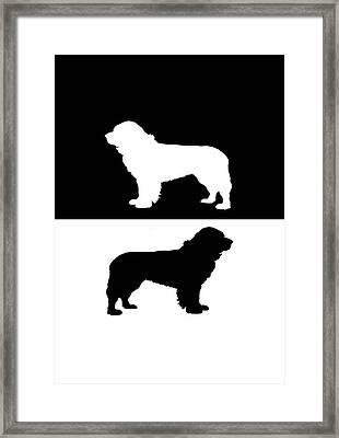 Newfoundland Dog Framed Print by Mordax Furittus
