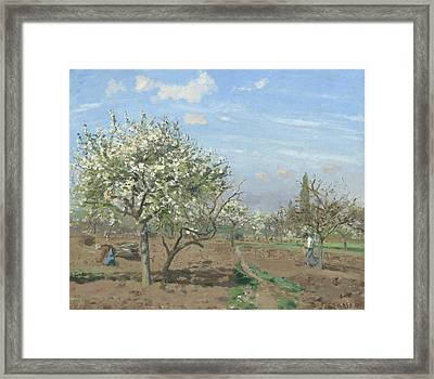 Orchard In Bloom Framed Print by Camille Pissarro