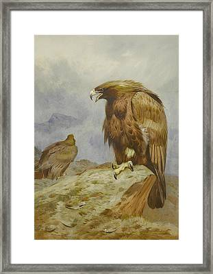 Pair Of Golden Eagles Framed Print by Archibald Thorburn