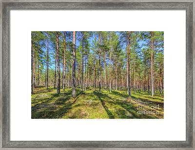 Pinewood Framed Print by Veikko Suikkanen