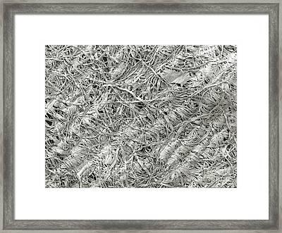 2-ply Toilet Paper, Sem Framed Print by Scimat