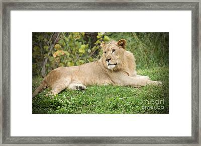Rest Stop Framed Print by Judy Kay