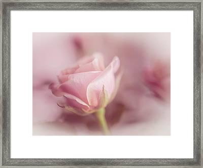 Romance Framed Print by Cindy Grundsten