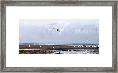 Seagull Framed Print by Svetlana Sewell