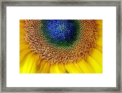 Sunflower Framed Print by Jessica Jenney