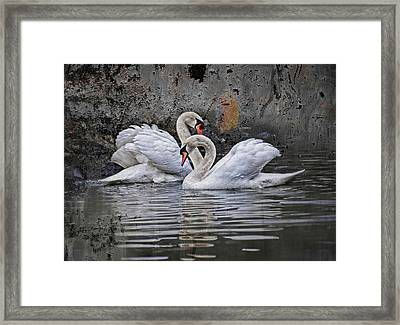 Tango Of The Swans Framed Print by Joachim G Pinkawa