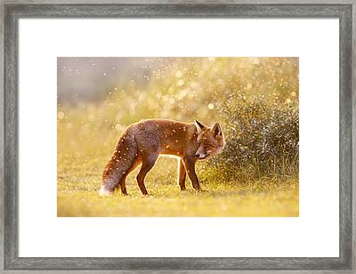 The Fox And The Fairy Dust Framed Print by Roeselien Raimond